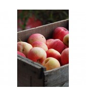 Ябълки за прясна консумация
